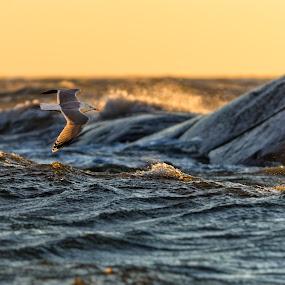 Through the waves by Sergei Pitkevich - Animals Birds