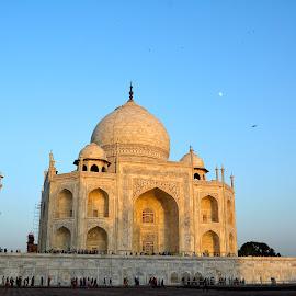 The Taj  by Asif Bora - Buildings & Architecture Public & Historical (  )