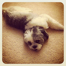 Photo: Mr. King resting #intercer #dog #puppy #pet #pets #petsofinstagram #funny #black #white #rest #beautiful #animal #look #eyes - via Instagram, http://ift.tt/1BVjDPF