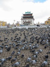 Photo: More pigeons than Buddhas