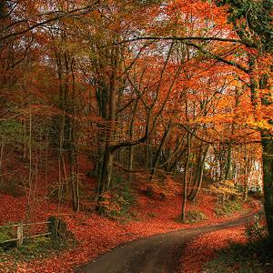 Autumn orange leaves in lanes-signed.jpg