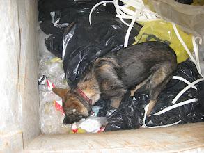 Photo: Bayla 5 mnd har funnet nissen i en kontainer med plast