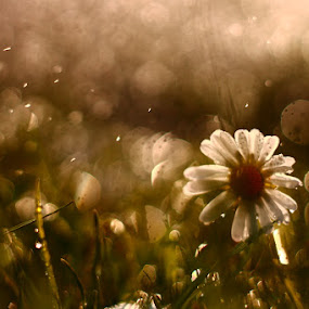 by János Farkas - Nature Up Close Flowers - 2011-2013
