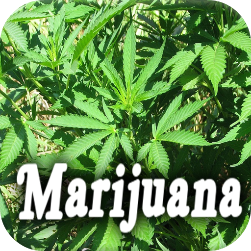 history of marijuana Throughout history different cultures have recorded use of marijuana as medicine governing bodies across the globe have had a difficult time deciding whether or.