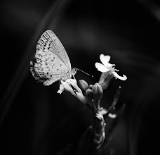 Photo: why is a butterfly called a butterfly  #bwphotography  #monochrome