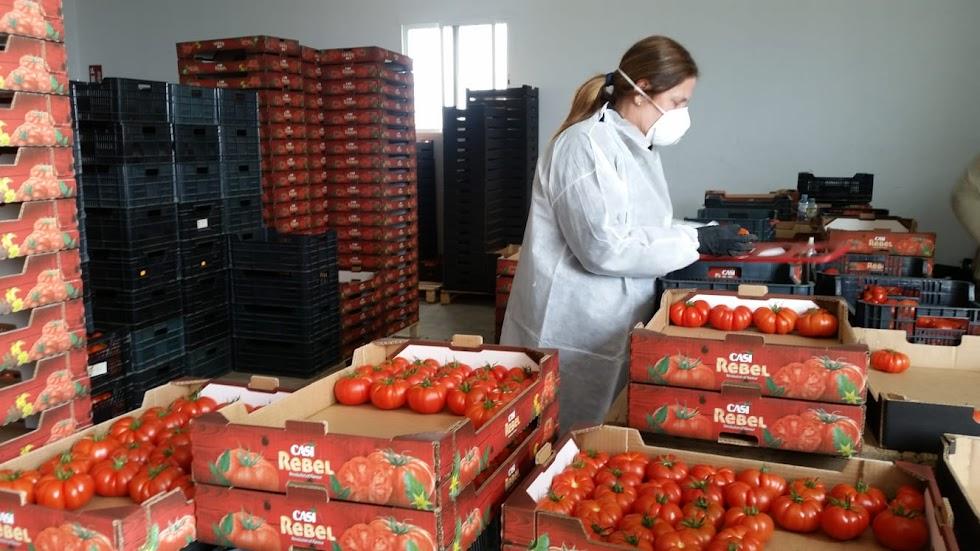 La cooperativa CASI, envasado agricultora en finca con EPIs.