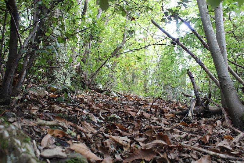 Piccolo scorcio del bosco  di Bibi93