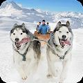 Snow Dog Sledding Transport Games: Winter Sports APK