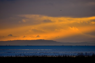 Photo: Sunset, view from W Dyke Trail in Richmond, BC