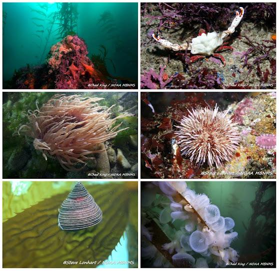 Fauna invertebrada asociada al kelp