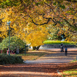 Nygårdsparken by Espen Rune Grimseid - City,  Street & Park  City Parks ( nature, autumn colours, norway, autumn leaves, october, nygårdsparken, autumn, yellow leaves, bergen, canon,  )