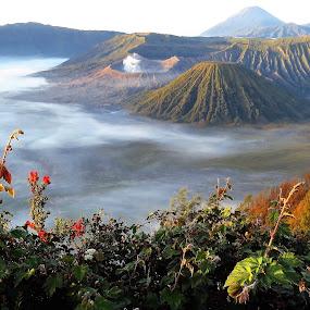 Bromo National Park Caldera by Kinga Urban - Landscapes Travel
