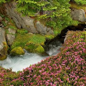 Горный ручей живые обои