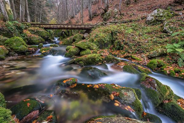 Nel bosco. di Mauro Rossi