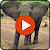Animal Sounds And Pictures file APK for Gaming PC/PS3/PS4 Smart TV