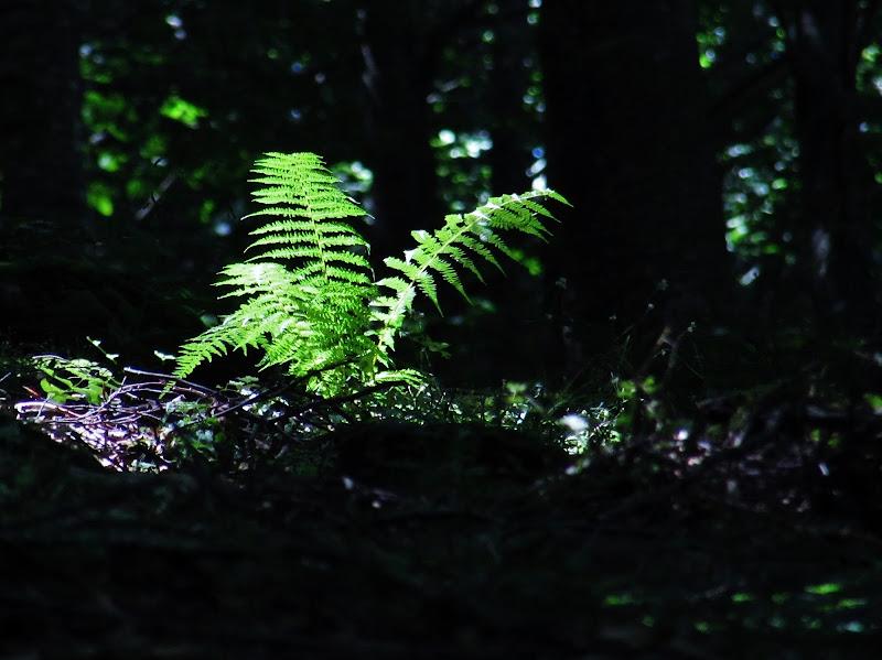 Baciata dal sole in mezzo al bosco di Giorgio Lucca