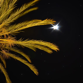 Palm Night by Sam Park - Nature Up Close Flowers - 2011-2013