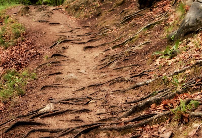 Cedi la strada agli alberi. di nena