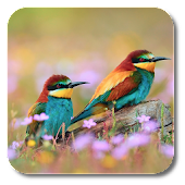 Spring Birds Live Wallpaper
