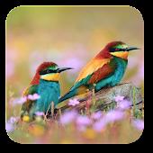 Spring Birds Live Wallpaper