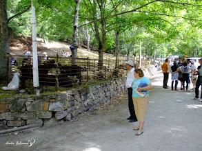 Photo: Sheeps are part of this event Fiesta del Pastor in Barrios de Luna