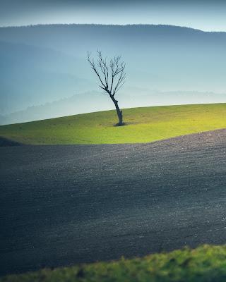 L'albero solitario di maxlazzi