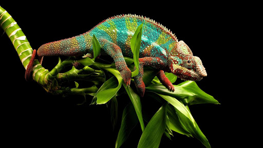 Chameleon HD Live Wallpaper