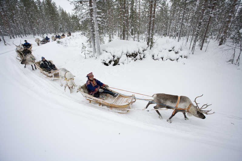 reindeer-safari