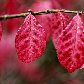 BRND leaf 11 O by Michael Moore - Nature Up Close Leaves & Grasses (  )