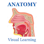 Anatomy Flashcard 2018 Edition 6.6.2