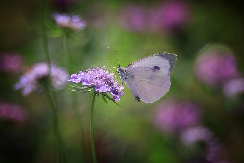 Profumi e colori di primavera di carracate