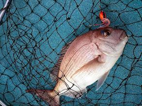 Photo: ・・・あはは。船頭さん。今度はタイラバで真鯛キャッチ。