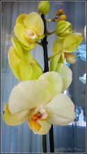 "Photo: ""Distractie""  din balconul meu -  orhidee - 2017.04.13"
