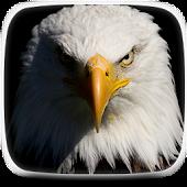 Flying eagle Live Wallpaper