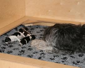Photo: mittlerweile können sie auch schon mal 'ohne Mama' schlafen