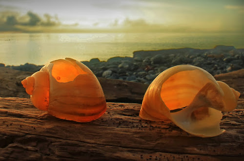 till death do us part by Bagus Santoso - Artistic Objects Other Objects ( manokwari, beach object, nature, sunrise, yellow, snail )