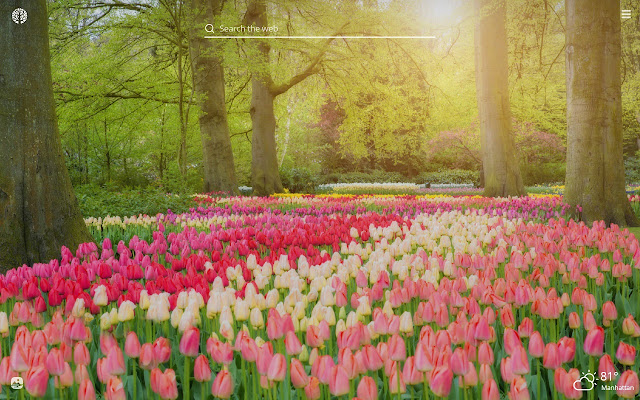 Spring Flowers HD Wallpapers New Tab Theme