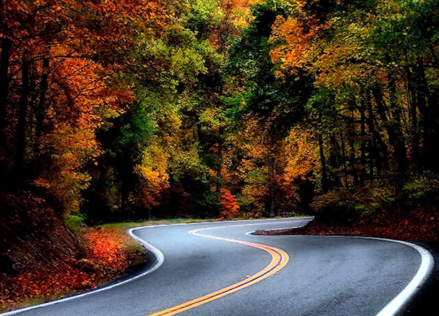 Stop the Car! by Marylee Pope - Landscapes Travel