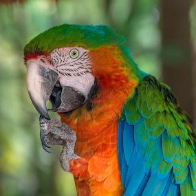 Color Clash by Pax Bell - Animals Birds ( bird, parrot, gird )