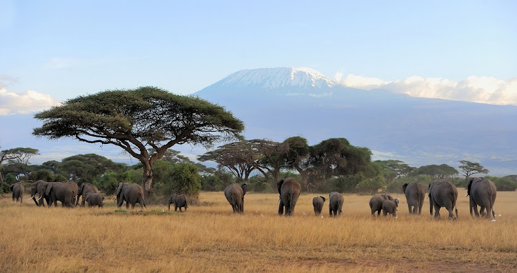 In response to the surge in ivory poaching in Africa, US philanthropist and Microsoft co-founder Paul Allen and technologists from his company Vulcan have developed EarthRanger. Picture: 123RF/ BYRDYAK