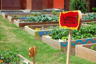 Photo: This vacant lot in an inner city neighborhood has been turned into a community garden