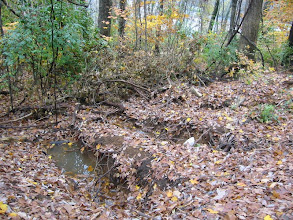 Photo: Soil conditions can have a big impact on decomposition.