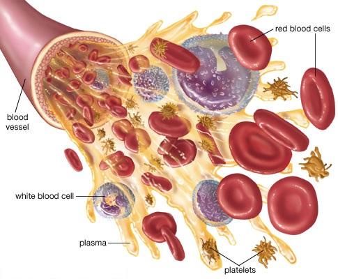 Platelet-Rich Plasma