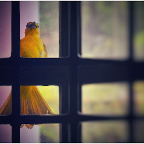 Bird by Dipin Dev P - Animals Birds ( bird, flying, window, morning, birds )