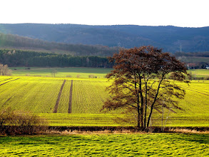 Photo: Green Line  #treetuesday // +Tree Tuesdayby +Shannon S. Myersand +Christina Lawrie #fotoamateur // +Fotoamateurby +Britta Rogge// +Karsten Meyer// +Scotti van Palm// +Markus Landsmann// +Remo Primatesta #landscapephotography // +Landscape Photographyby +Margaret Tompkins #hqsplandscape // +HQSP Landscapeby +Ara MO// +Rodolfo Seide//+John Minor// +Rinus Bakker