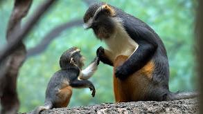 Primate Families thumbnail