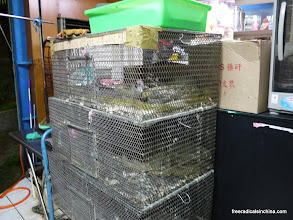Photo: Live, caged snakes smell sort of gross