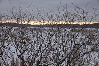 Photo: Elderberry silhouette