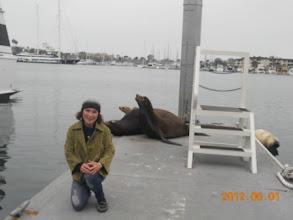Photo: Lại gần hải cẩu hơn