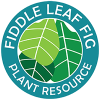 Fiddle Leaf Fig Plant Resource Center